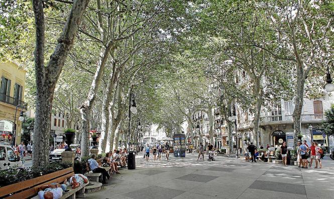 Der Borne in Palma ist von Platanen gesäumt.
