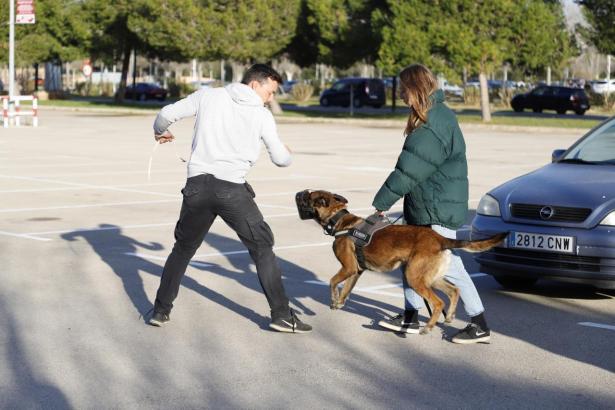 Auf Mallorca wurden die ersten Schutzhunde ausgebildet, die Frauen vor geschlechtsspezifischen Angriffen schützen sollen.