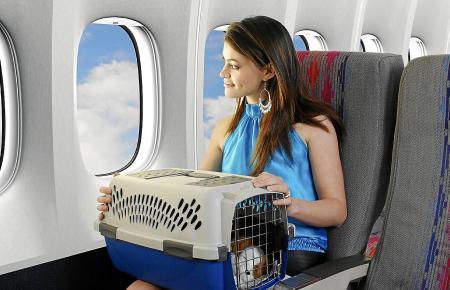 Im Flieger können auch Haustiere mit auf die Insel reisen.