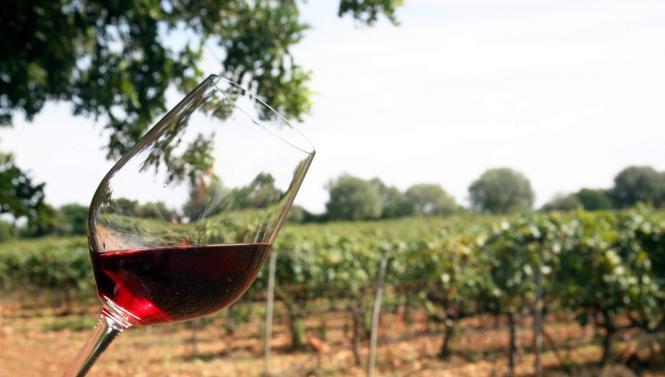 Insel-Weine können in Inca verkostet werden.