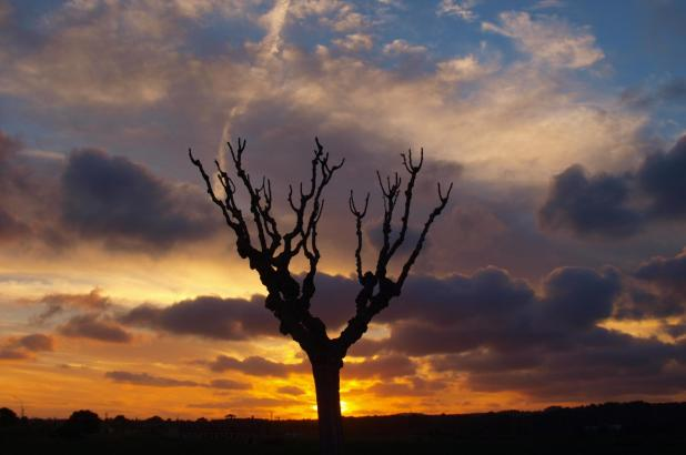 Stillleben mit Baum, Wolken und untergehender Sonne.