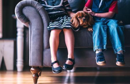 Auch mehr als drei Fiffis dürfen noch künftig aufs Sofa.