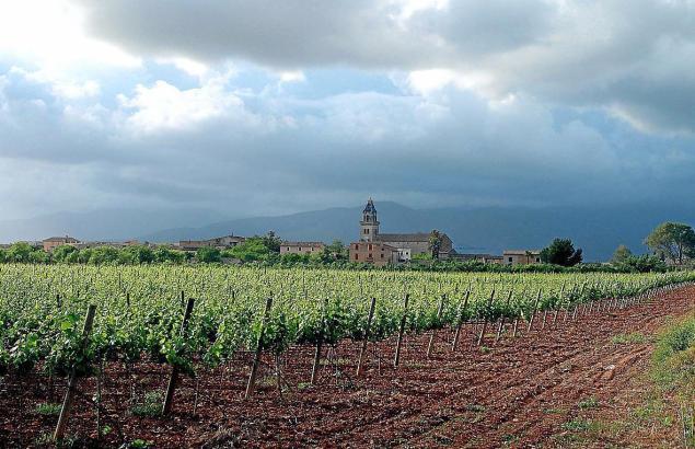 Die Schüler werden praktische Erfahrungen in vielen Bodegas auf Mallorca sammeln.