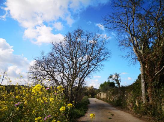 Wenn der Frühling auf Mallorca Einzug hält, dann kommt Freude auf.