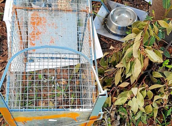 Mit diesen Fallen werden die Katzen gefangen und anschließend kastriert.