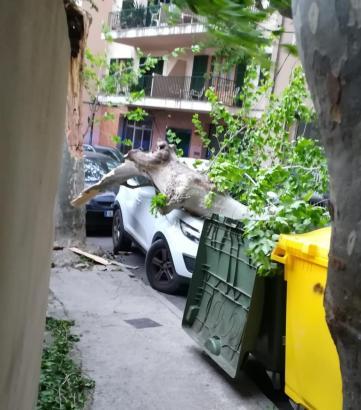 Teile eines alten Baumes stürzten in Sóller auf diesen geparkten Wagen.