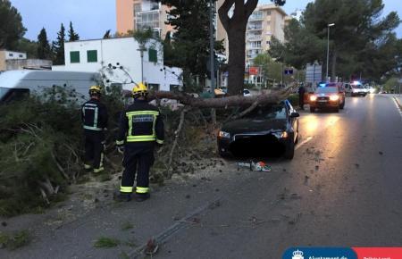 In Palmanova ist am Samstag eine alte Kiefer auf ein fahrendes Auto gestürzt. Die Insassen kamen mit dem Schrecken davon.