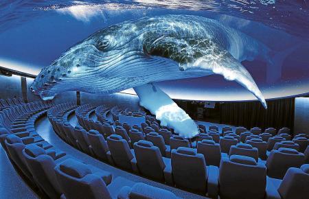 Als würde man alsbald wie einst Jonas im Wal-bauch verschwinden: Das Aquarium-Erlebnis ist fast lebensecht, was auch Alt-Königin