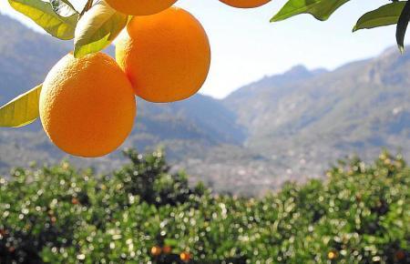 Wenn die Früchte prall am Baum hängen, kommt Freude auf