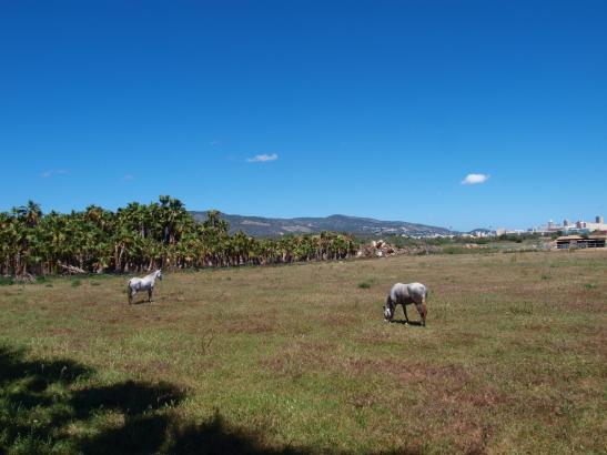 Eine nahezu unbewölkter Himmel über einer Pferdekoppel bei Sa Porrassa (Magaluf).