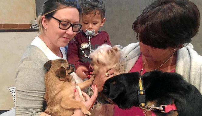 """Noelia, eine Freundin der verstorbenen Besitzer von """"Rony"""", kümmert sich nun um den gebeutelten Tierheim-Hund."""