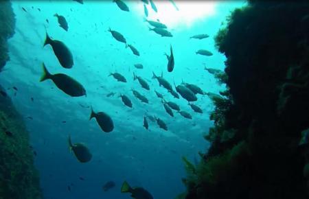 2004 wurde rund um die Insel Toro bei Calviá ein Marinereservat gegründet. Seitdem haben sich gefährdete Fischarten dort wieder