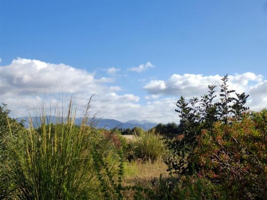 Schöner Blick in Mallorcas Mai-Landschaft.