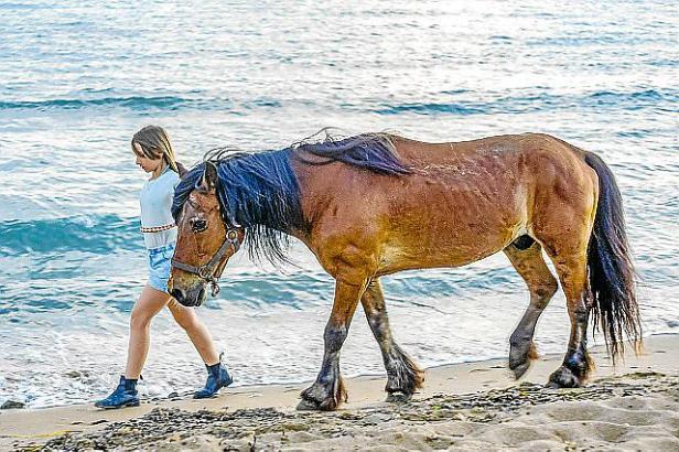 In Zeiten der Wirtschaftskrise hatten Pferde in Spanien kein leichtes Leben.