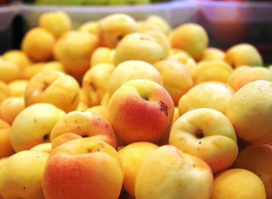 Mallorca-Aprikosen sind die besten.