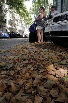 Aufgrund der Hitze lassen vor allem viele Platanen in Palma wie hier in der Calle Simó Ballester in Santa Catalina ihre Blätter