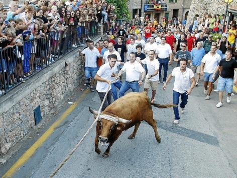 Das Stiertreiben in Fornalutx auf Mallorca ist nicht so gefährlich wie das in Pamplona.
