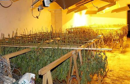 In einem Haus in Maria de la Salut sollen zwei Männer und eine Frau eine Marihuana-Plantage mit mehr als 750 Pflanzen betrieben