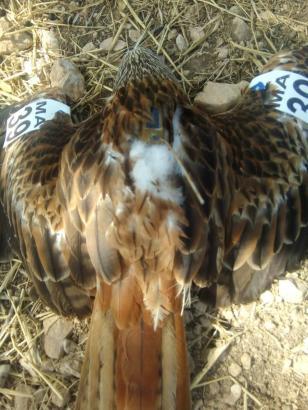 Blick auf den Vogelkadaver.