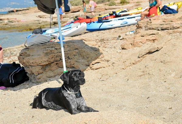 Den anwesenden Hunden scheint es am Strand von Es Carnatge zu gefallen.