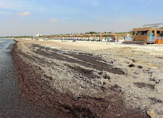 Sehen nicht besonders schön aus und riechen auch nicht besonders gut: Algenberge am Es-Trenc-Strand.