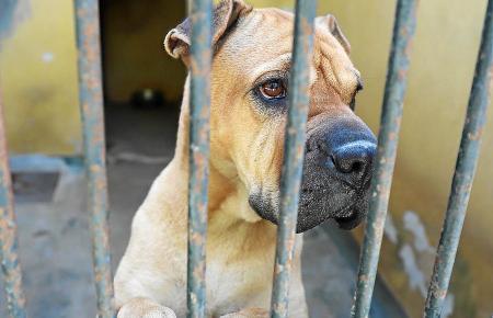 Palmas Tierheim Son Reus meldet weniger ausgesetzte Tiere in diesem Sommer.