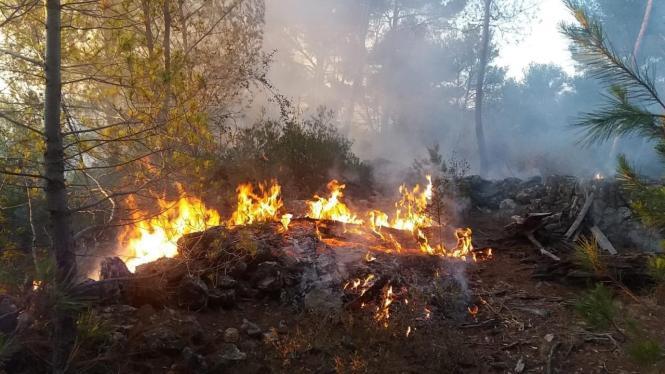 Foto vom Feuer in Son Quint.