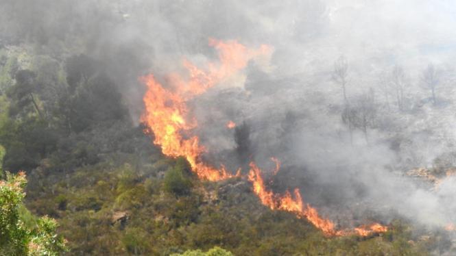 Waldbrände haben zwischen August 2018 und September 2019 fast 100 Hektar Baumbestand auf Mallorca zerstört.