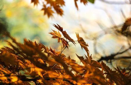 Bald werden auch auf Mallorca die Blätter fallen.