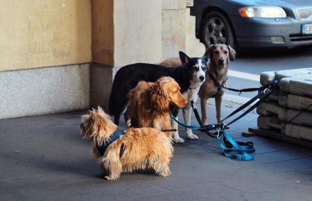 In Mallorcas Tierheimen suchen viele Hunde ein neues Zuhause.