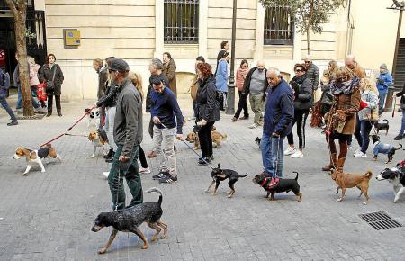 Auf Mallorca gibt es zahlreiche Haustiere, auch in kleinen Haushalten.