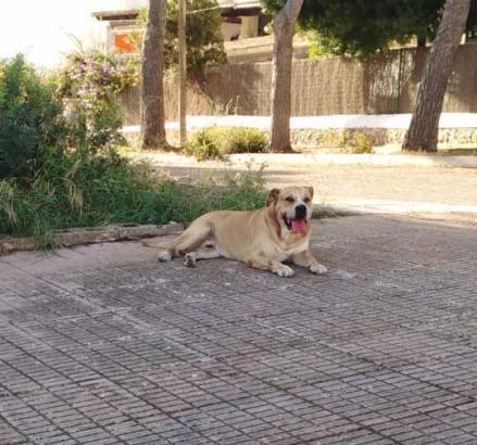 Der Hund ruht sich nach seinem Angriff aus.