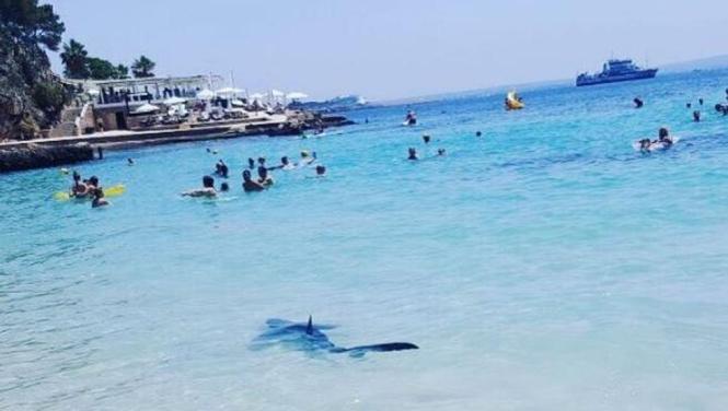 Im Sommer 2017 sorgte ein kranker Hai vor dem Strand von Illetes für Aufregung.