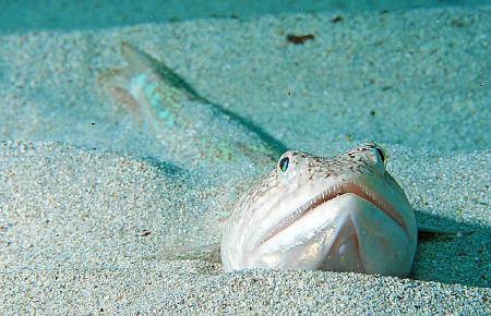 Auge in Auge mit dem Meeresgetier.