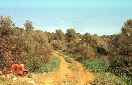 Die Leiche wurde in der Umgebung von Palma gefunden.