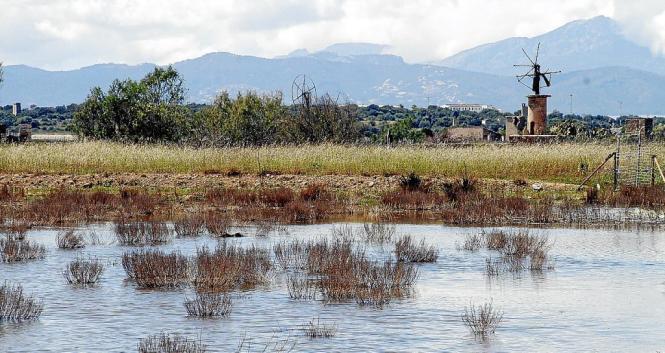 Von Überschwemmungen bedroht ist die Sant-Jordi-Ebene in Flughafennähe.