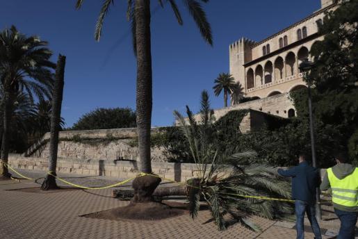 Diese Palme erschlug am 3. November vor der Kathedrale eine Frau.