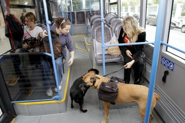 Hunde in einem Palmesaner Stadtbus.