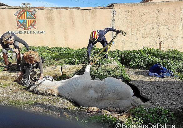 Das Pferd konnte von der Feuerwehr aus seiner misslichen Lage befreit werden.