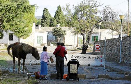 Anwohner füttern mitunter das auf dem Siedlungsgelände lebende Pferd.