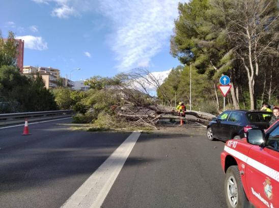 Umgestürzter Baum auf der Autobahn Palma - Andratx.