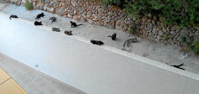 Straßenkatzen auf Mallorca.