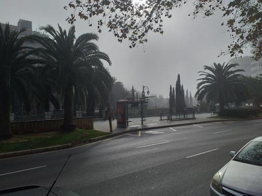 Der Paseo de Mallorca in Palma war am Mittag des ersten Weihnachtstages schlagartig von Nebel eingehüllt.