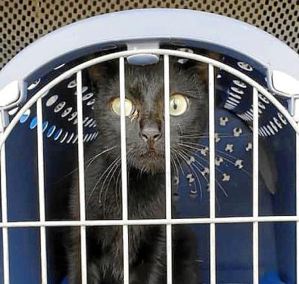 Katze Stella wurde zunächst auf eine Pflegestation gebracht.