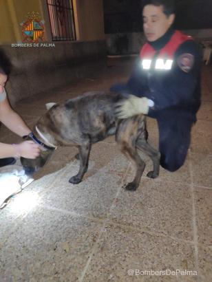 Einsatzkräfte der Feuerwehr haben den Hund mit Öl aus seiner misslichen Lage befreien können.