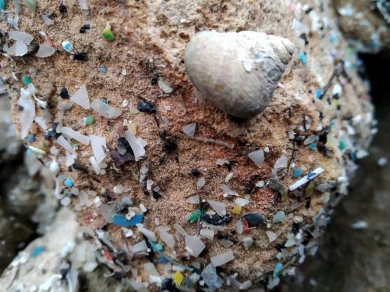 Die kleinsten Plastikpartikel können über die Nahrung auch in den menschlichen Organismus gelangen.