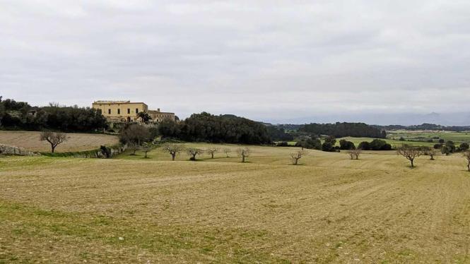 Winter auf Mallorca, hier die Zentralebene bei Sant Joan.