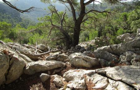 Der Wanderer war in der Gegend Puig Caragoler unterwegs.