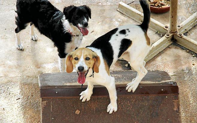Hunde an einer Kette zu halten sollte laut Tierschutzkommission mit sehr hohen Bußgeldern bestraft werden.n.