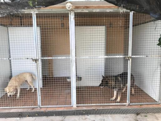 Die beiden an Leishmaniose erkrankten Polizeihunde werden nicht korrekt gepflegt.